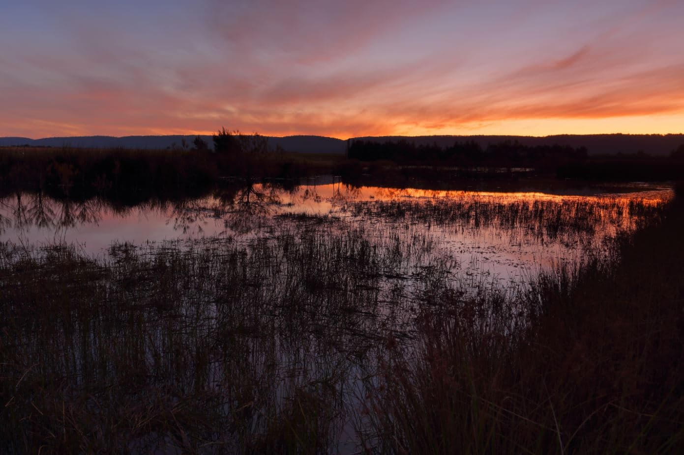 Sunset shot of the Penrith Wetlands in Australia